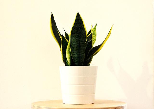 Nenáročné rostliny pro začátečníky