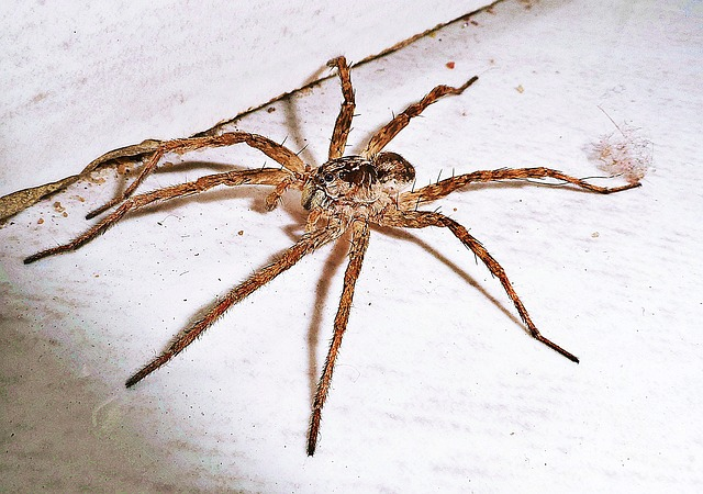 pavouk na zemi